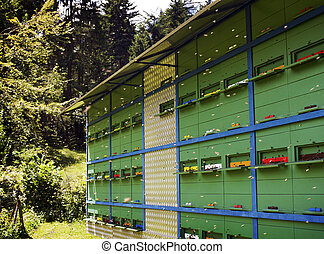 apiary - Mobile apiary of different colors and many bee...