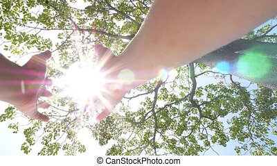 Hands Holding the Sun through Rich Tree Foliage.
