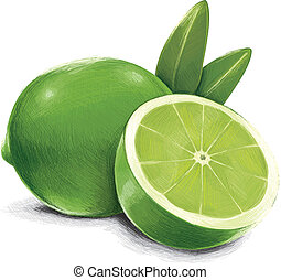 Green Lime - Lime was digital drawn in Vector Program, only...