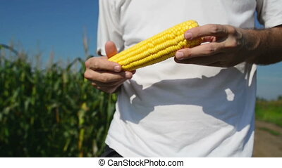 Farmer with corn cob - Farmer in Cultivated agricultural...