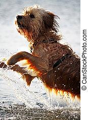 molhados, cão