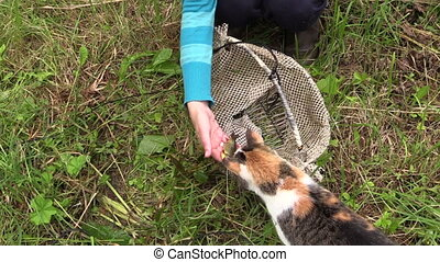 Hand give fish for cat - Hand give small fresh crucian fish...