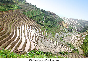 Longji rice terraces UNESCO site, Guangxi province, China