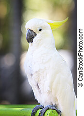 portrait of white cockatoo birds perching on birds standing