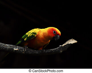 Colorful Parrot on black background