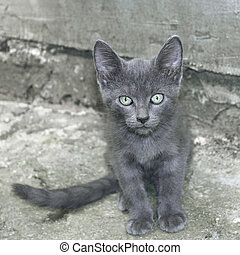 Small gray cat outdoors - Portrait of small cat outdoors on...