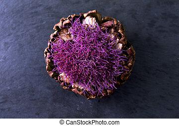 Purple Flowering Artichoke - Dried Artichoke on black...