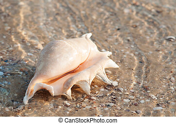 Beautiful shell on the beach in the sand in the summer