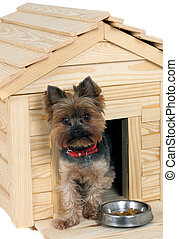 small wooden dogs house and small dog