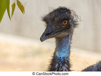 emu head, big eyes