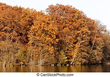 Autumn Lakeshore - Orange-brown fall foliage at lake...