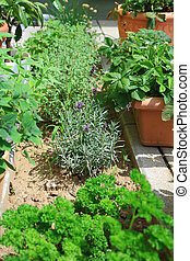 Herb garden - Collection of different herbs in small garden