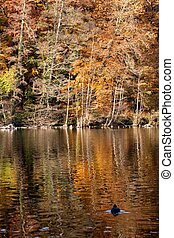 Fall Lake - Fall lake reflects colorful foliage on the shore...