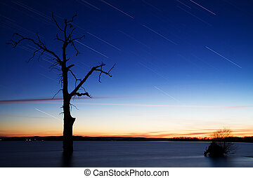 Startrails around Old tree in lake