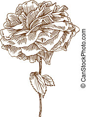 Rose Drawing Six