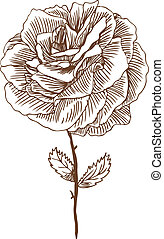 Rose Drawing Four
