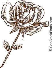 Rose Drawing One - Beautiful hand drawn rose bloom stem with...