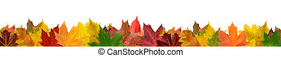 Autumn leaves - Different colored isolated autumn leaves on...