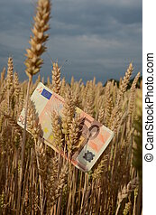 agriculture business concept - euro banknote on ripe summer end wheat ears