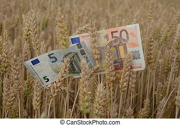 euro banknotes money on ripe wheat ears in field Agriculture...