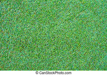 Grass green color