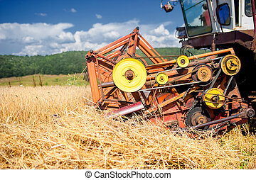 process of harvesting with combine, gathering mature grain...
