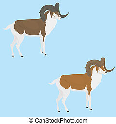 goat with long horn