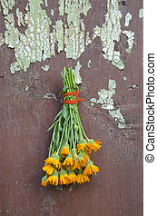 fresh calendula marigold medical herb flowers bunch on old...