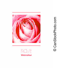 Rose watercolour - A delicate pink rose watercolour. EPS10...