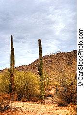 Sonora Desert - Summer Sonora desert in central Arizona USA