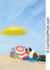 cooling down for dog at the beach - Funny dog is having a...