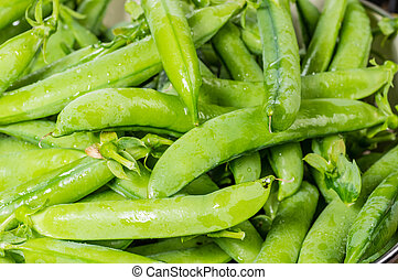 Fresh green pea pods in a bowl - Freshly picked green pea...