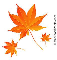 maple leaf - Nature series: maple leaf on the spring season