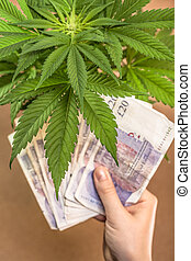 Marijuana business concept. Cannabis plant and hand with...