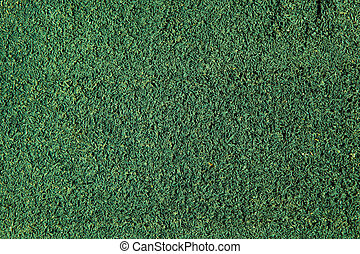 Green grass close-up. Can be used as background