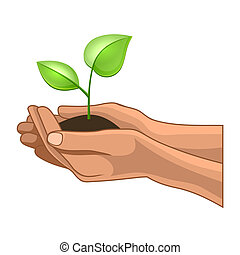 Hands and Plant on White Background Illustration