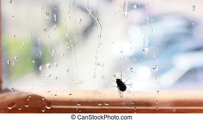 fly on window