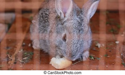 small rabbit eating bread
