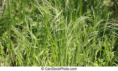 fresh grass - natural background
