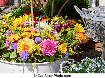 florist - colorful display with asters at a florist