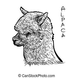 Alapca - Alpaca head-sketch vector on white background