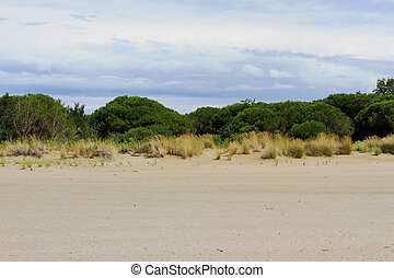 vegetation with low shrubs and sand 1 - vegetation with low...