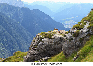 Marmots and Fassa Valley - rocks with marmots over Fassa...