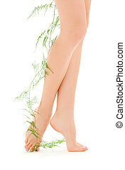 female legs with green plant - picture of female legs with...