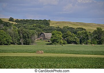 Sagging barn - A sagging barn in the distance grove of trees...