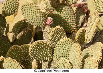 Cactus tree at summer - Huge Cactus green tree at summer day