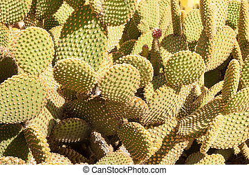 Cactus tree at summer - Huge Cactus green tree at summer day