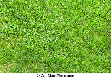Green grass field background texture