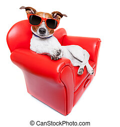 dog sofa - dog sitting on red sofa relaxing and resting...
