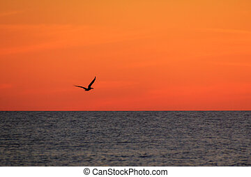 SIlhouette of a Pelican at Sunset - Silhouette of a pelican...